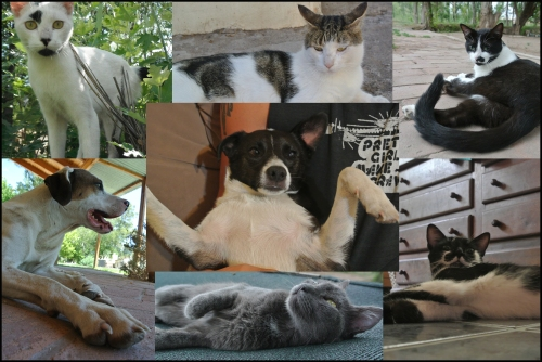 Their pets, who we love almost as much as we love Norma & Silverstein!