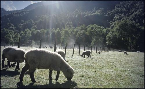 PNH - grazing